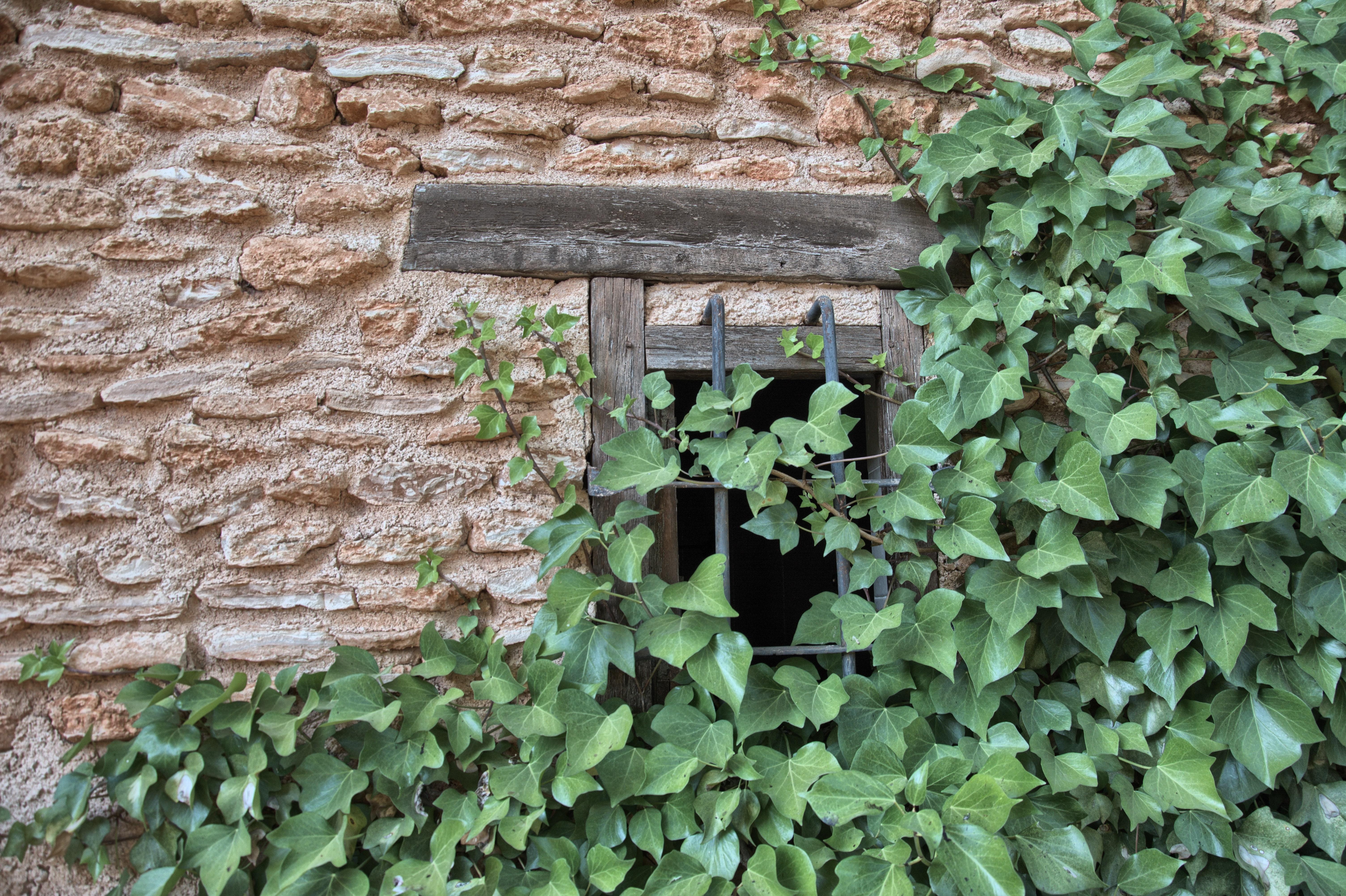 """Detalle zona ajardinada yedra con muro. Complejo Turístico Rural """"El Romeral"""""""